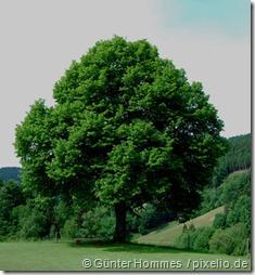 529285_web_R_K_B_by_Günter Hommes_pixelio.de